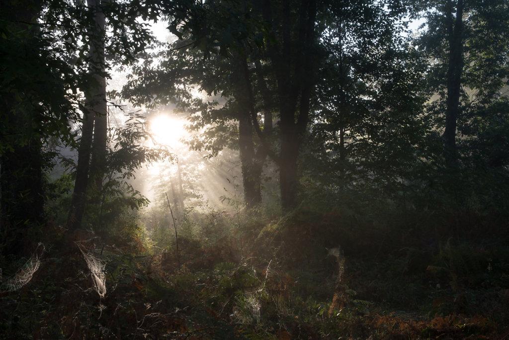 Matin et brouillard